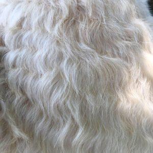Sophie's fur